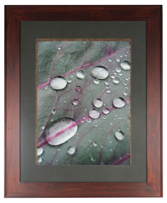 Red Cabbage Leaf w/ Raindrops by Caron