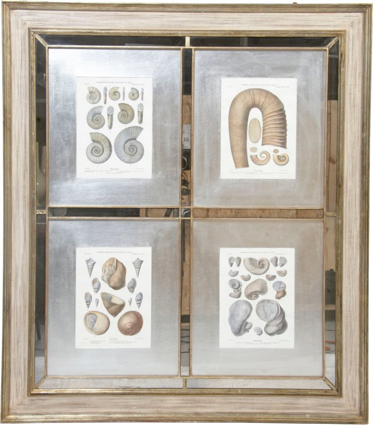 4 Fossil Prints in Frame