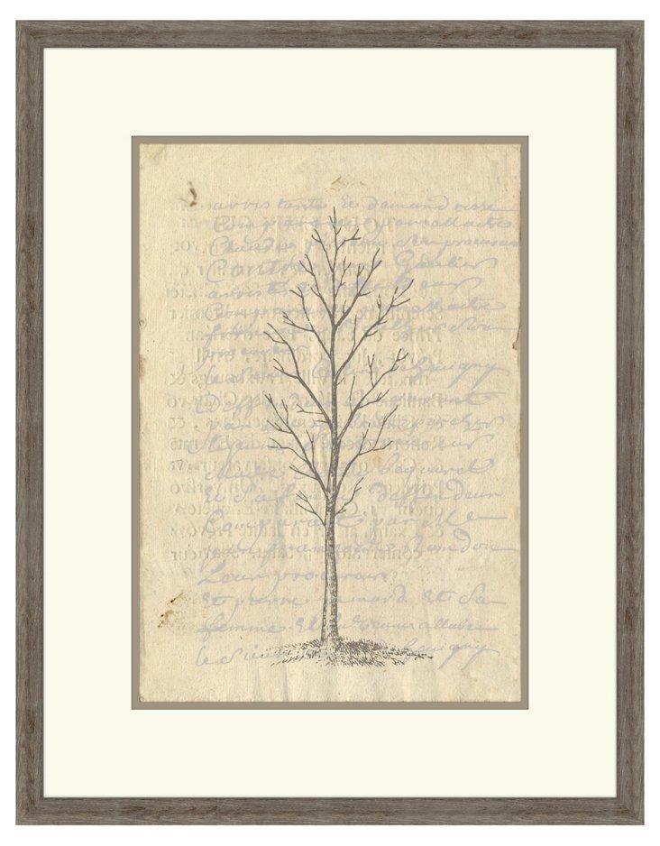 Fig Tree I
