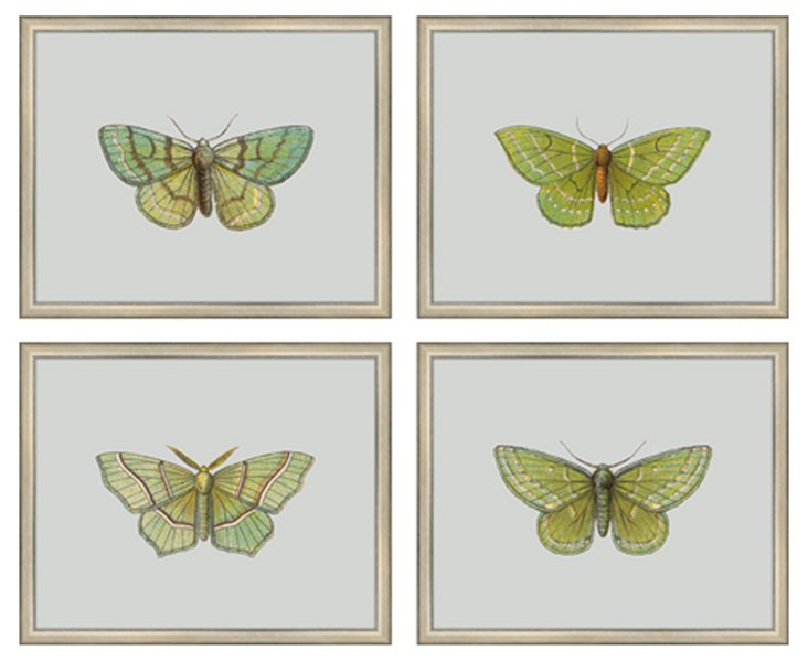 Butterfly on Cool Gray, Set of 4