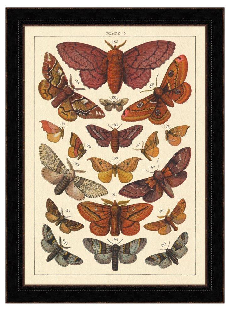 Spring Butterfly Study VI