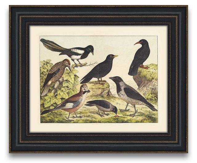Beautiful Birds II