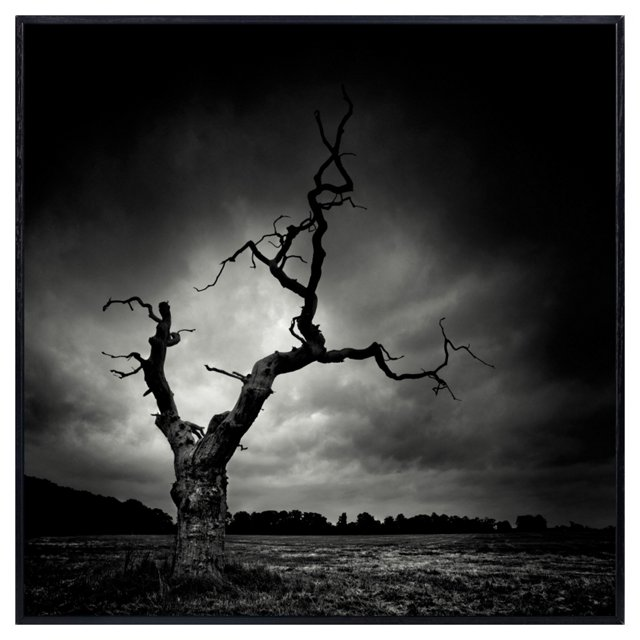 The Last Tree