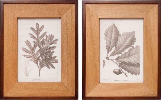 Botanical Prints, Pair I