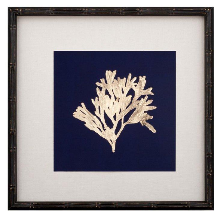 Gold-Leaf Kelp on Navy I