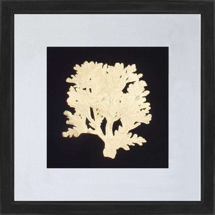 Gold-Leaf Coral II
