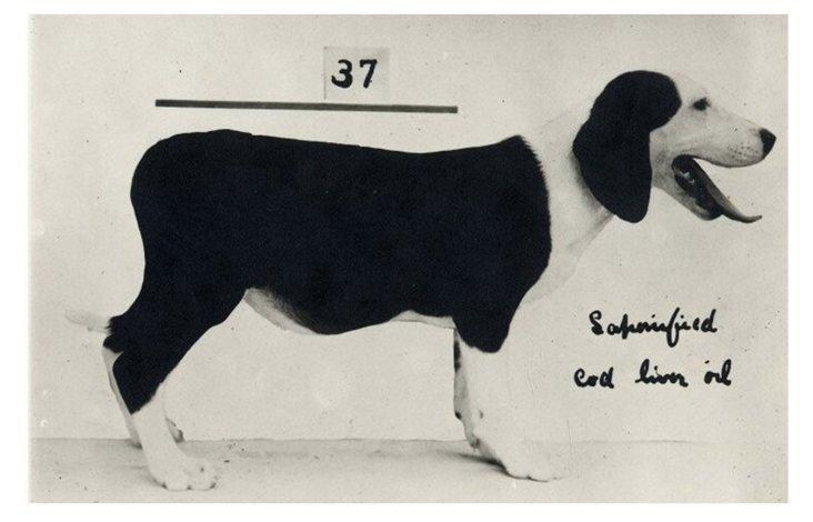 Dog Measurement Framed Print