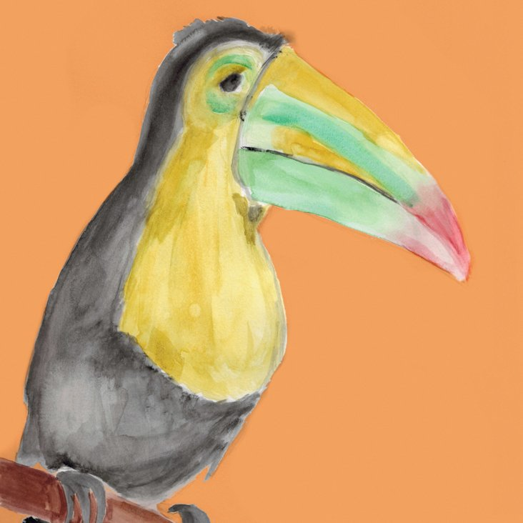 Lauren Rowinski, Orange Toucan