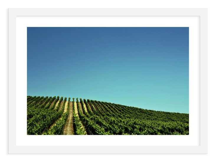 Kevin Russ, California Vineyard