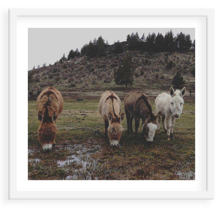 Kevin Russ, Miniature Donkeys