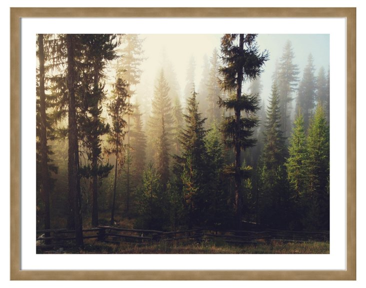 Kevin Russ, Sunrise Forest