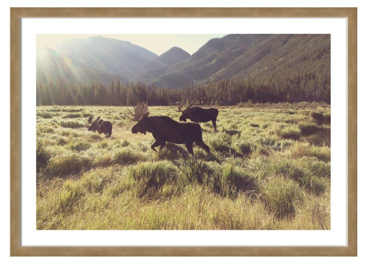 Kevin Russ, Three Meadow Moose