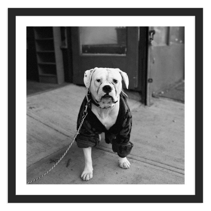 Graham Kuhn, Dog