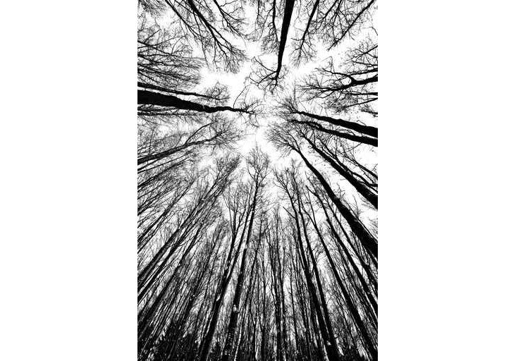 Vera Kuttelvaserova, Tree Silhouettes