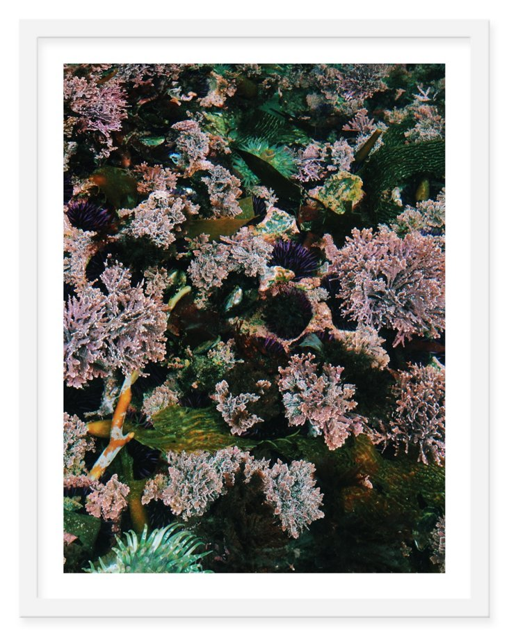 Kevin Russ, Plants