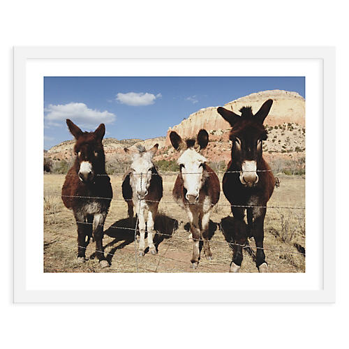 Kevin Russ, Four Donkeys