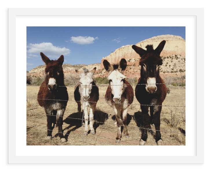 Kevin Russ, Four Donkeys