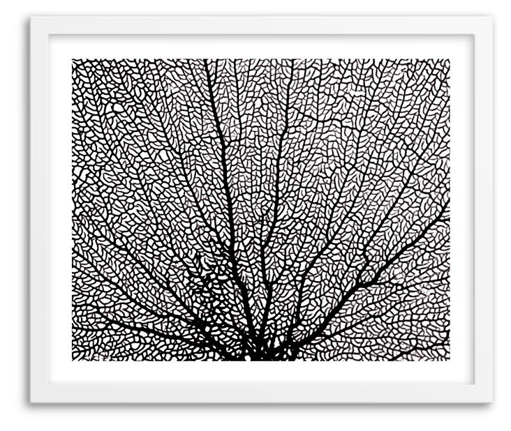 Cultura Science, X-ray Image of Coral