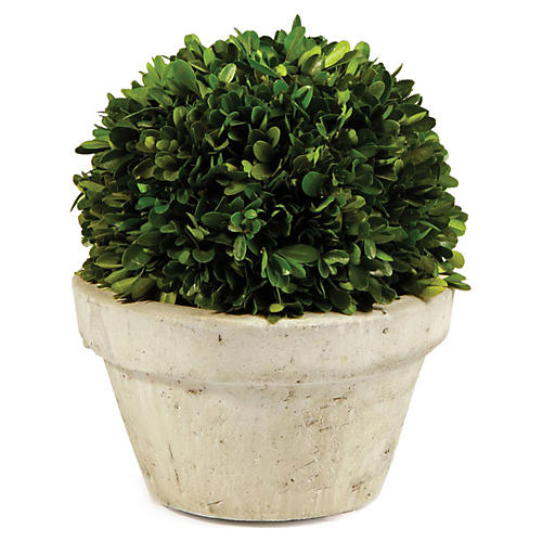 "10"" Large Ball Topiary, Preserved"