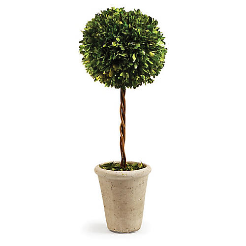 "23"" Single-Ball Topiary, Preserved"