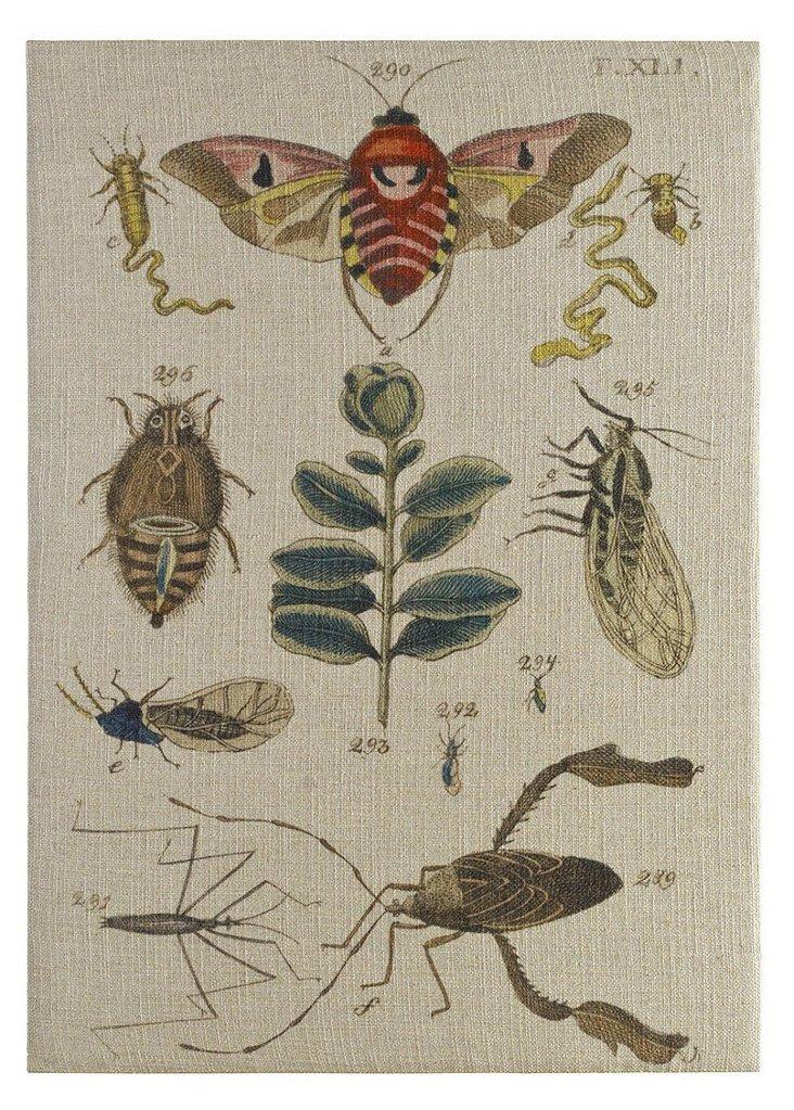 Natures Museum Artwork, 37 x 52