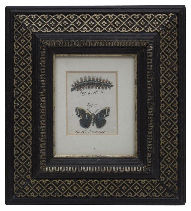 19th-C. Butterfly & Caterpillar Print
