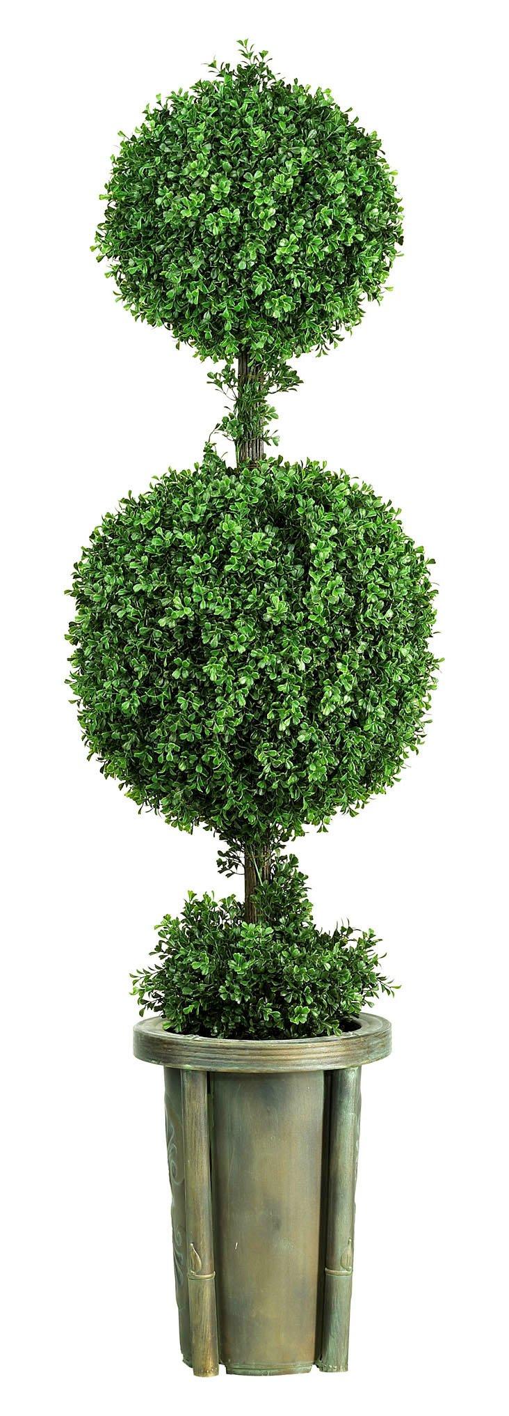 5' Leucodendron Topiary w/ Vase