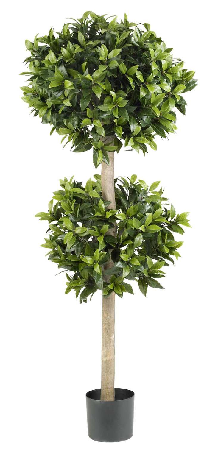 """54"""" Sweet Bay Double Topiary, Faux"""