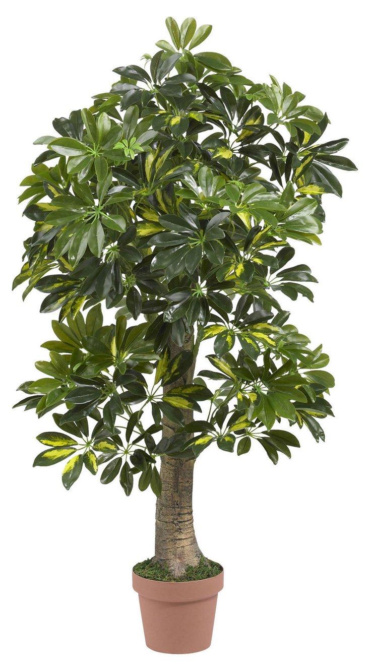 4' Schefflera Tree, Faux