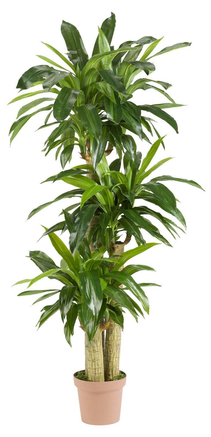 5' Cornstalk Dracaena Plant, Faux