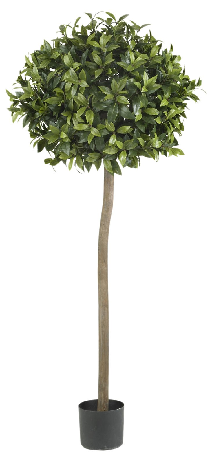 5' Sweet Bay Topiary, Faux