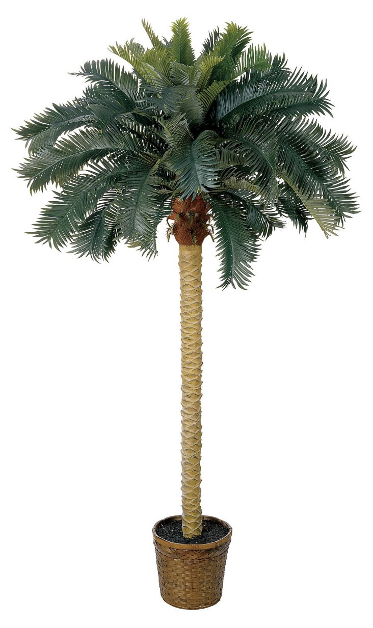 6' Sago Palm Tree