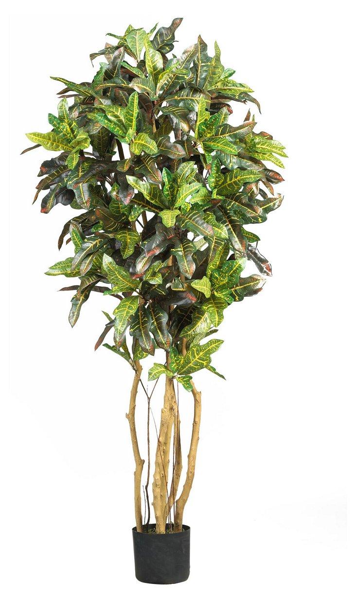 5' Tropical Black Bamboo Tree
