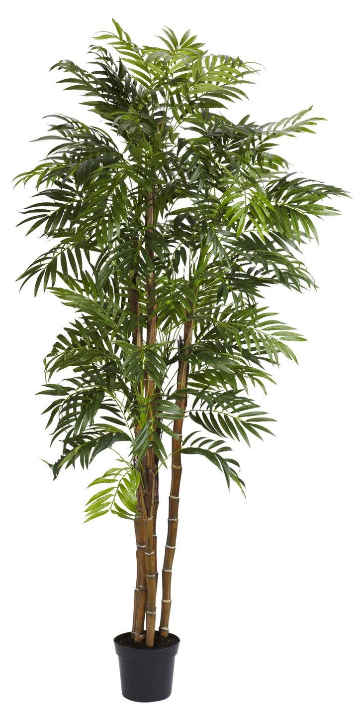 6' Bella Palm Tree