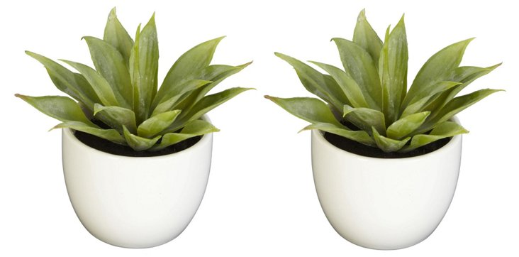 "S/2 6"" Agave Succulents in Pots, Faux"