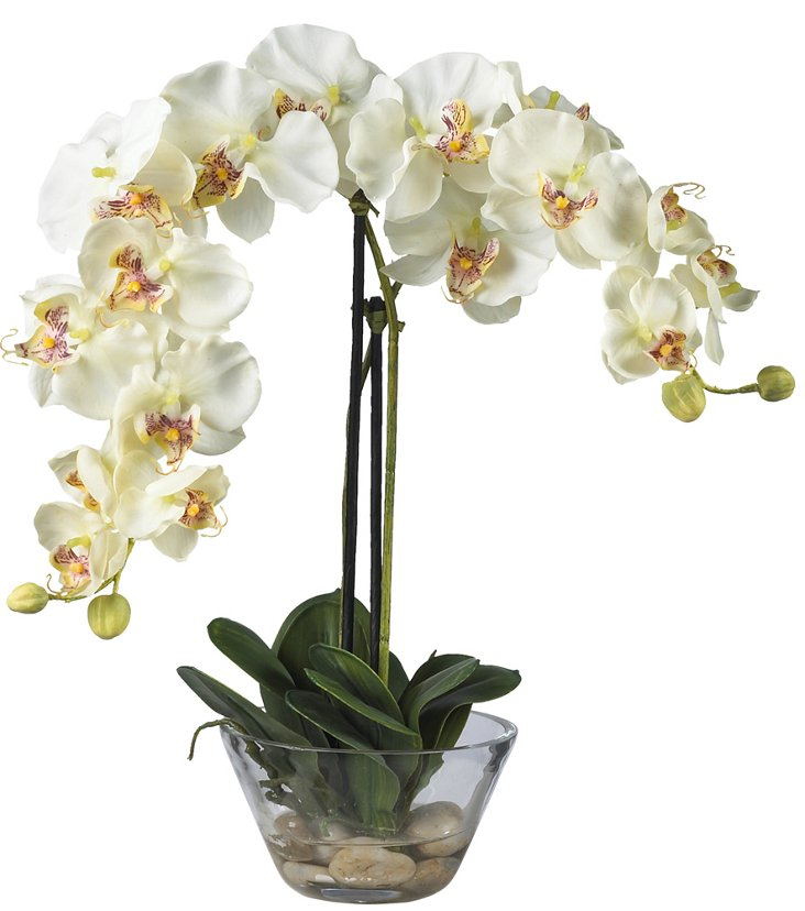 "18"" Phalaenopsis in Glass Pot, Faux"