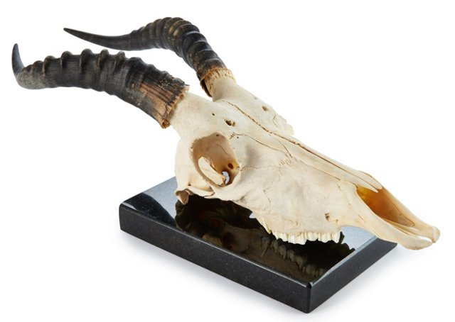 Blesbok Skull on Marble Base