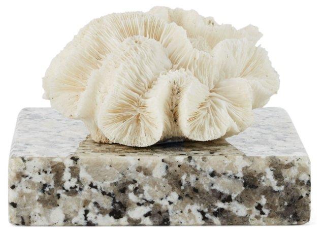 """5"""" Open Brain Coral on Granite"""