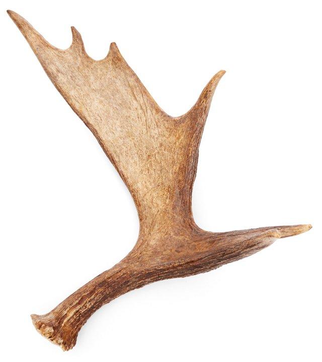 """24"""" Moose Antler, Natural"""