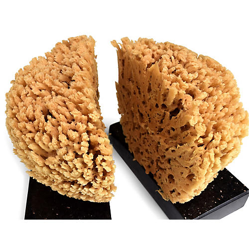 S/2 Kuri Sea Sponge Bookends, Natural/Black