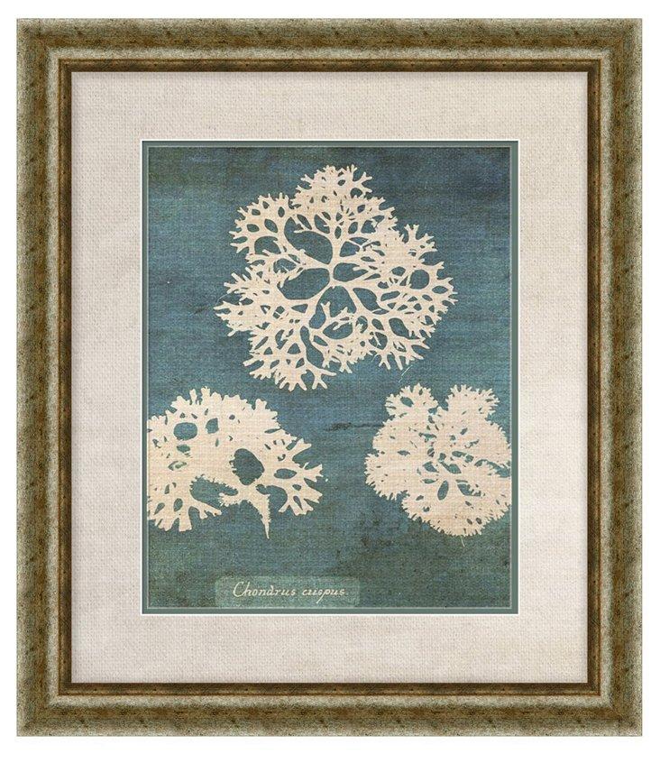 Coral Print I