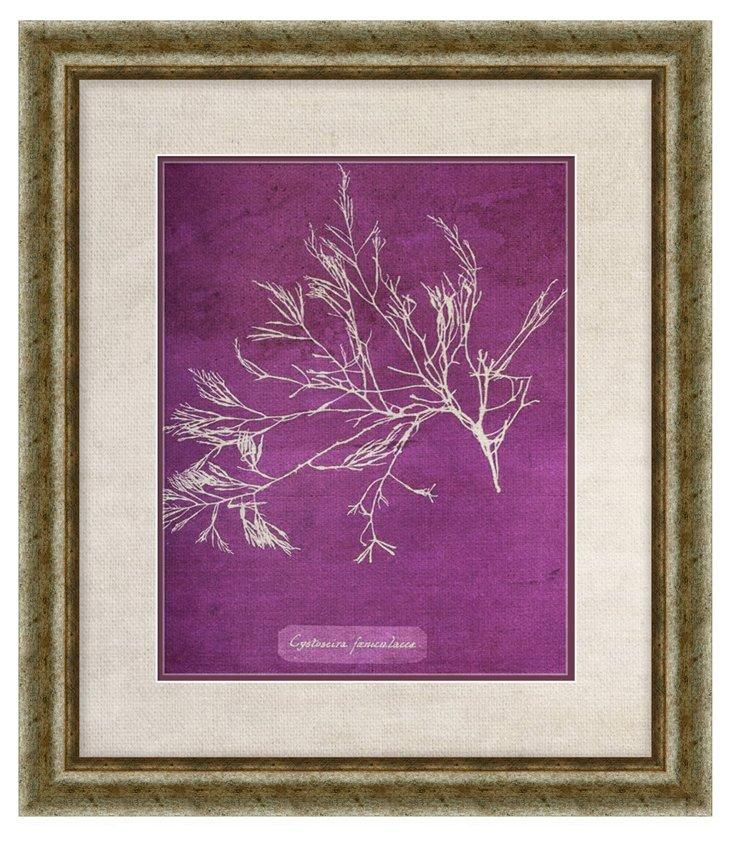 Purple Coral Print I