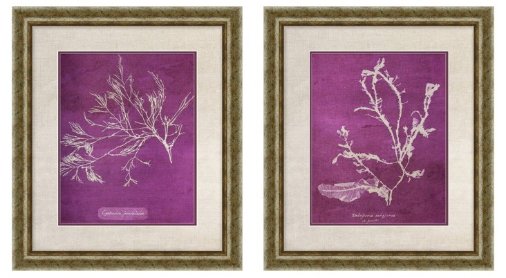 Purple Coral Diptych