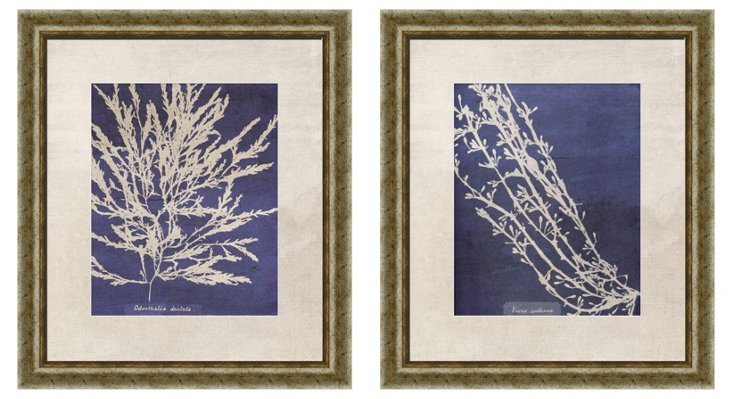 Vintage-Inspired Coral Diptych