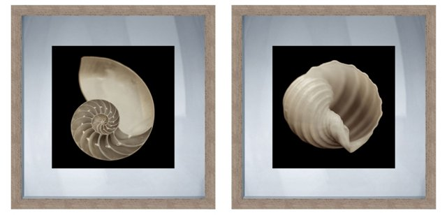 Black and White Shells, Set of Two