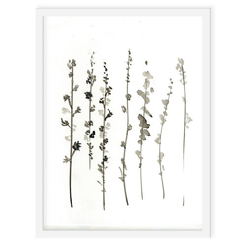 Ayelet Iontef, Sepia Plants
