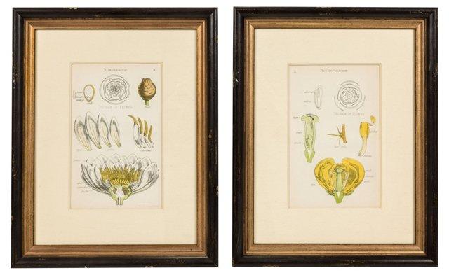 Vintage Botanical Prints, Set of 2