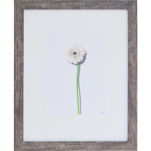 Dandelion Study 1, Richard Bowers