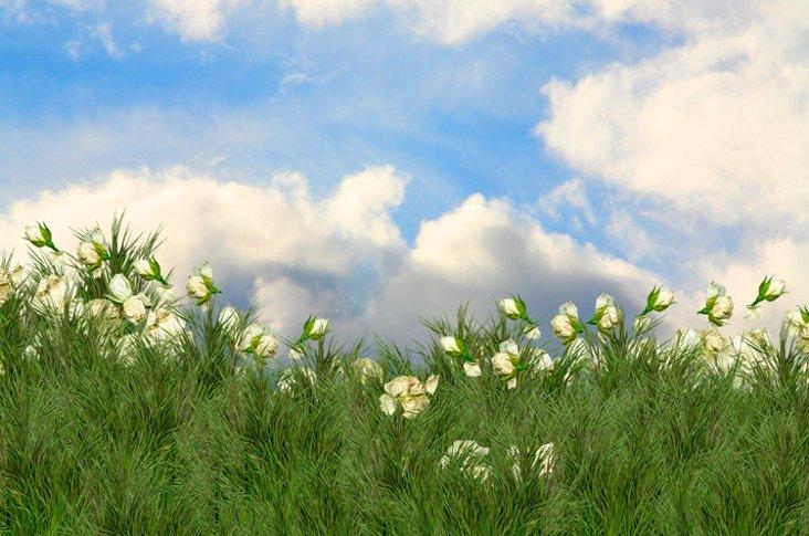Cindy Bennett, When Roses Fly