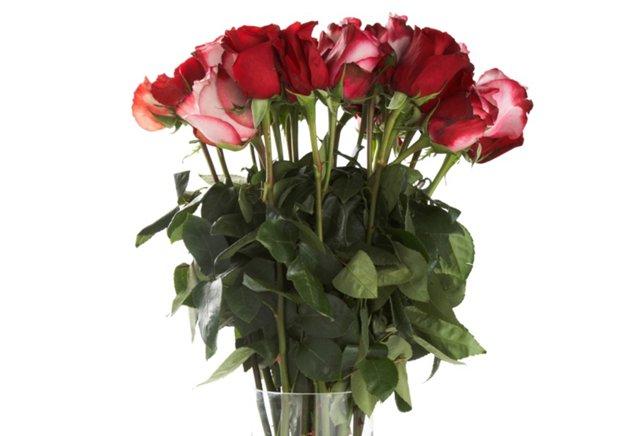 100 Premium Long-Stem Roses, Red/White